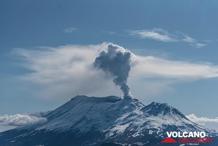 View back to Zhupanovsky volcano from the north. (Photo: Tom Pfeiffer)