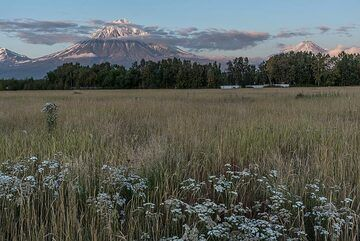Evening view of Koryaksky (l) and Avachinsky (r) volcanoes from a field near our dacha (guesthouse). (Photo: Tom Pfeiffer)