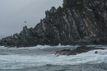 Many sea birds also inhabit the area. (Photo: Tom Pfeiffer)