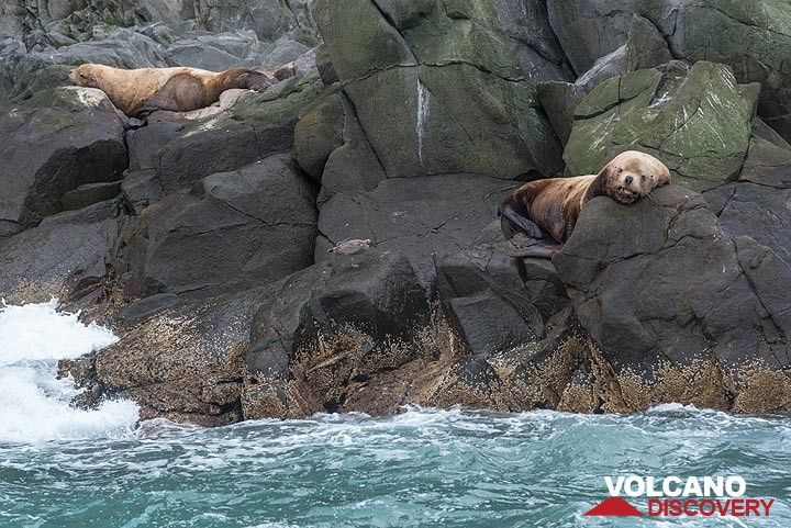Sea lions relaxing in the (for them) fine weather. (Photo: Tom Pfeiffer)
