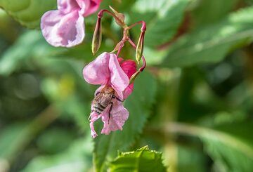 Pink flowers (1) (Photo: Tom Pfeiffer)