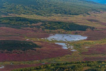 At this time of year, the tundra is colored green, yellow and intense red. (Photo: Tom Pfeiffer)