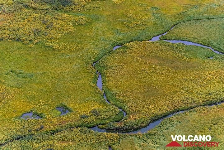 Swamps and small creeks on the floor of the Karymsky caldera. (Photo: Tom Pfeiffer)