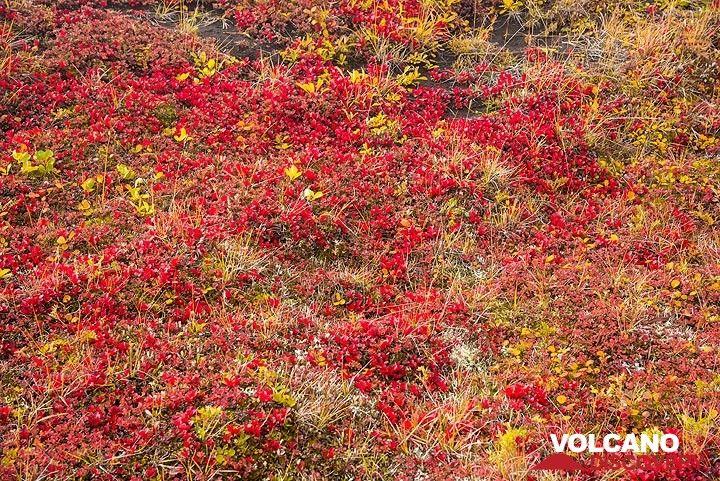 Red tundra (Photo: Tom Pfeiffer)