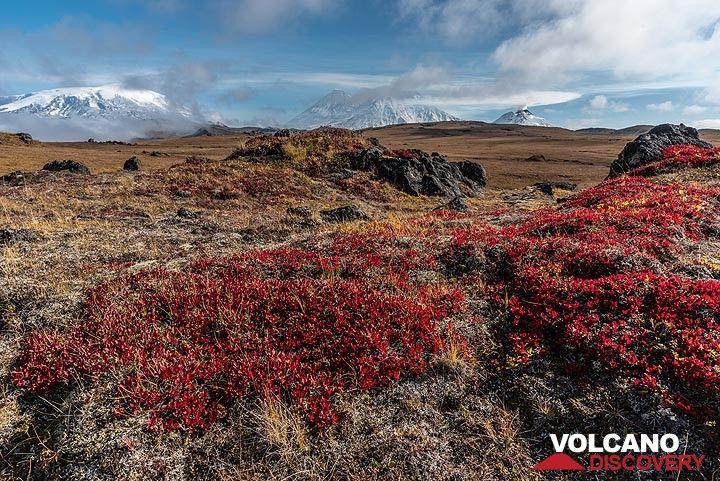 Panorama of 4 volcanoes (l-r): Ushkovsky, Klyuchevskoy, Kamen and Bezymianny seen from the plateau north of Tolbachik. (Photo: Tom Pfeiffer)