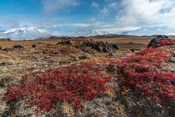 Ushkovsky (l), Klyuchevskoy, Kamen (m) and Bezymianny (r) volcanoes seen behind the tundra in red autumn colors. (Photo: Tom Pfeiffer)