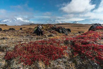 Ushkovsky, Klyuchevskoy, Kamen and Bezymianny volcanoes are ligned up in the background. (Photo: Tom Pfeiffer)