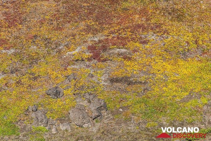 Yellow tundra (Photo: Tom Pfeiffer)
