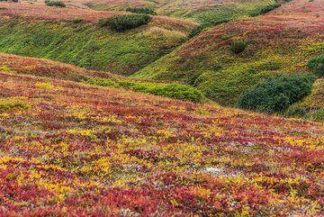Small valleys in the tundra plain (Photo: Tom Pfeiffer)