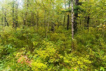 Intense forest green (Photo: Tom Pfeiffer)