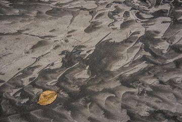 Ash and flood plain at the foot of Klyuchevskoy (Photo: Tom Pfeiffer)