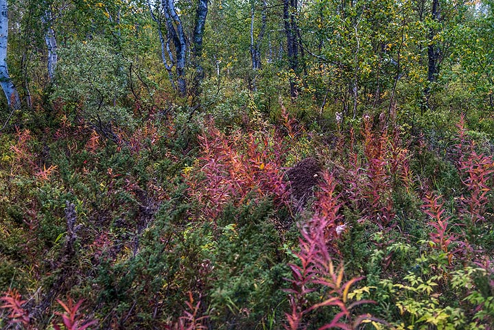 Patches of red (Photo: Tom Pfeiffer)