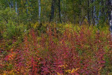 Red forest flowers (Photo: Tom Pfeiffer)
