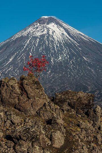 Klyuchevskoy volcano with a red tree (2) (Photo: Tom Pfeiffer)
