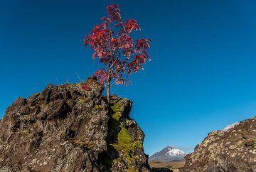 Red flag (Photo: Tom Pfeiffer)