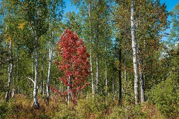A flame in the forest (Photo: Tom Pfeiffer)