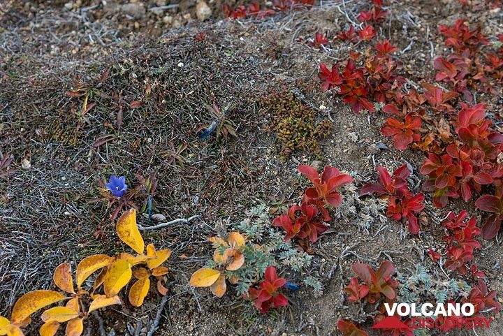 Blue-yellow-red (Photo: Tom Pfeiffer)