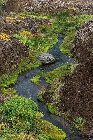 Small creek (Photo: Tom Pfeiffer)
