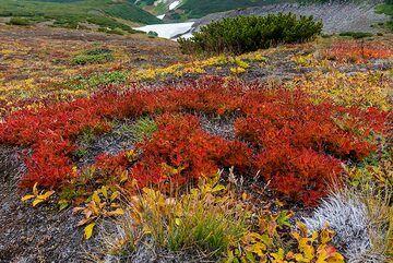 Red colony (Photo: Tom Pfeiffer)