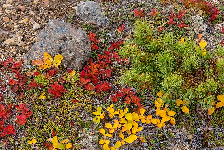 Red, green and yellow (Photo: Tom Pfeiffer)