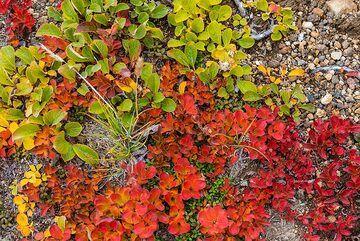 Green, orange and red (Photo: Tom Pfeiffer)