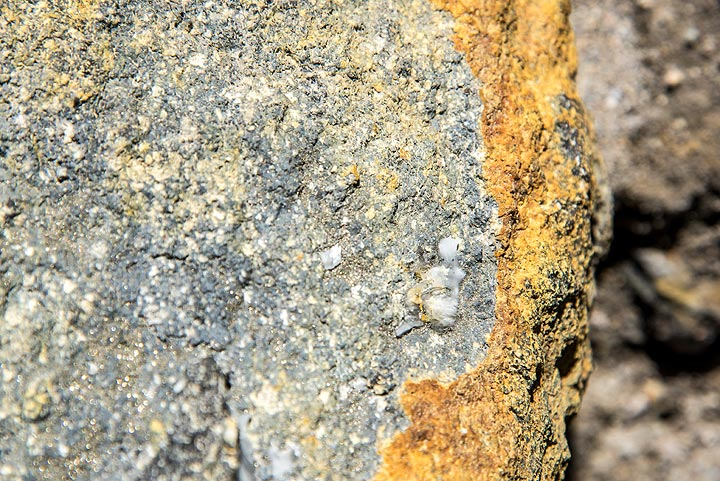 Minerals abound in the altered rocks that much of the instable walls are composed of. This specimen is covered with tiny pyrite (FeS) crystals. (Photo: Tom Pfeiffer)