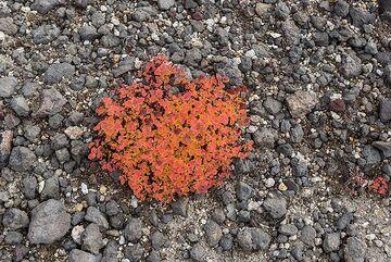 Orange on gray (Photo: Tom Pfeiffer)