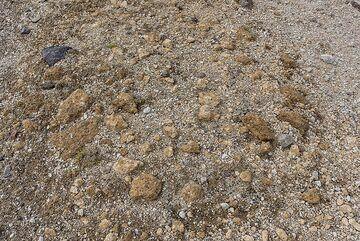 Pumice deposit forming the ground. (Photo: Tom Pfeiffer)