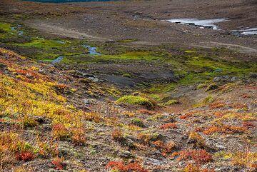 Tundra near Mutnovsky (Photo: Tom Pfeiffer)