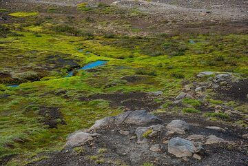 Intense green near small creeks (Photo: Tom Pfeiffer)