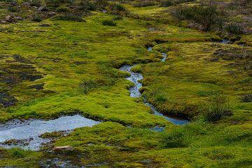 Green (Photo: Tom Pfeiffer)