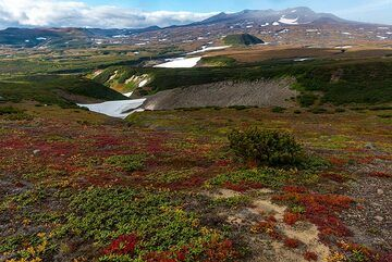 Tundra with red and green colors near the hut. (Photo: Tom Pfeiffer)