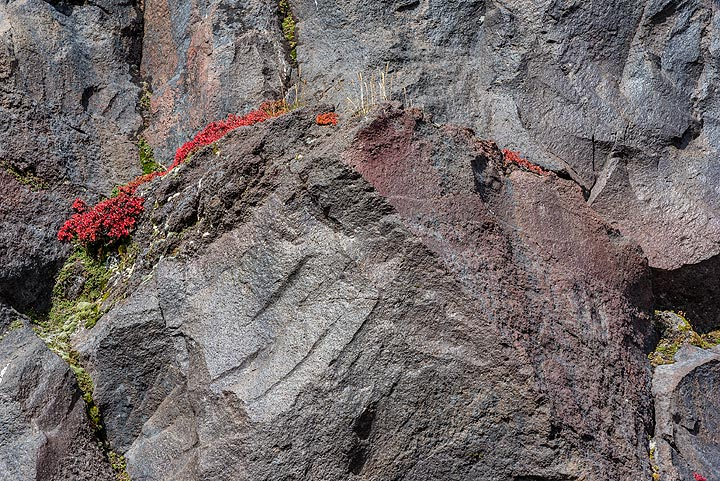 Plants holding on to tiny cracks in the lava rock faces. (Photo: Tom Pfeiffer)