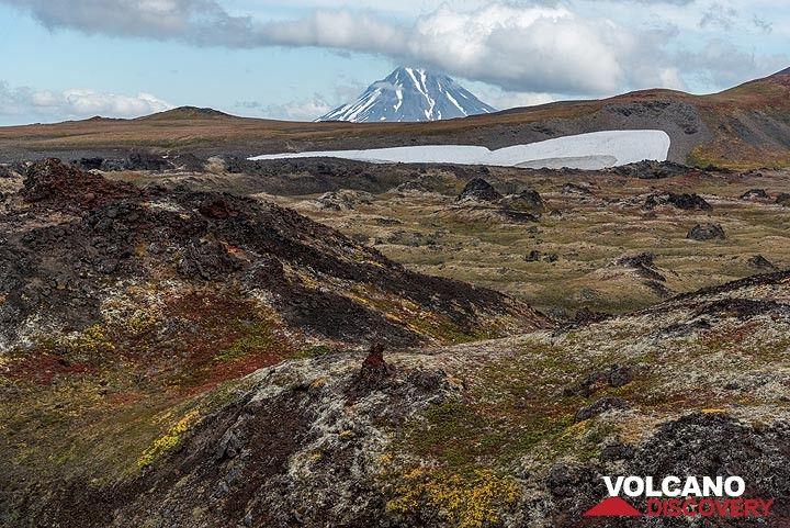 View over the vegetated lava flow towards Viluchinsky volcano (Photo: Tom Pfeiffer)