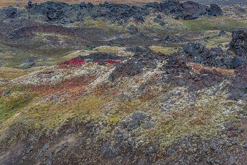 Pastel colors of delicate tundra (Photo: Tom Pfeiffer)
