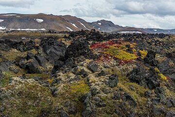 Blocky prehistoric lava flow with tundra cover (Gorely volcano) (Photo: Tom Pfeiffer)