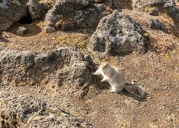 A curious visitor - a ground squirrel. (Photo: Tom Pfeiffer)