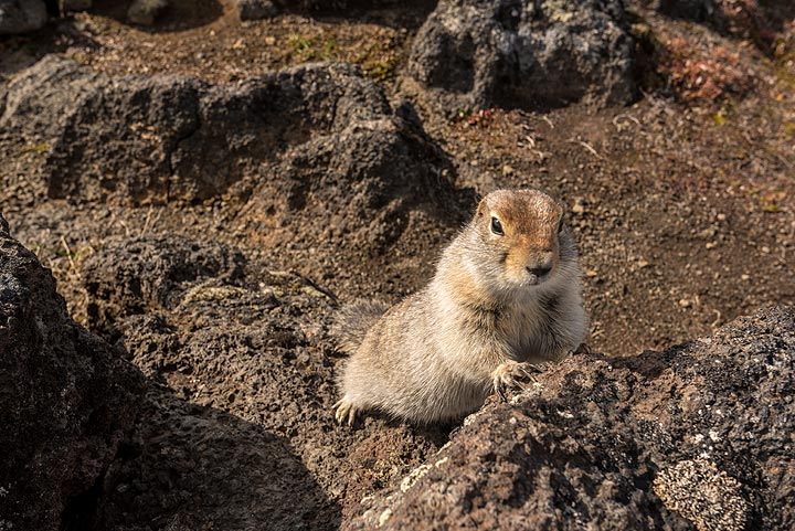 He or she is checking out whether I have something... (Photo: Tom Pfeiffer)