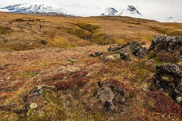 Yellow, brown and red tundra (still lots of berries in there...) (Photo: Tom Pfeiffer)