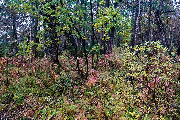 The forests on the lower slopes of the volcanic massifs are enchanting in autumn. (Photo: Tom Pfeiffer)