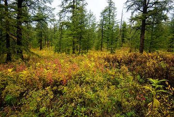 Green and red colors dominate the ground, while trees offer all shades of green. (Photo: Tom Pfeiffer)