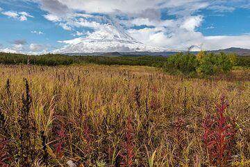 Fields of tall grass with Klyuchevskoy (Photo: Tom Pfeiffer)