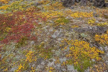 The colors of the tundra never cease to fascinate me. (Photo: Tom Pfeiffer)