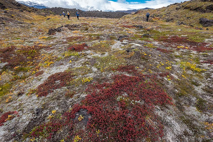 In this area, the presence of black lava and a thin layer of white pumice (probably from Bezymianny's catastrophic eruption in 1955-56) add to the color palette. (Photo: Tom Pfeiffer)