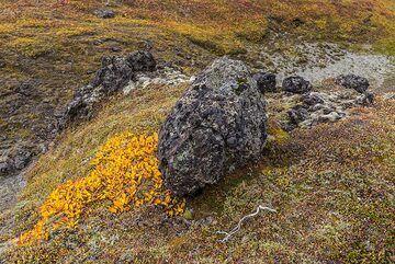 Yellow and black (Photo: Tom Pfeiffer)