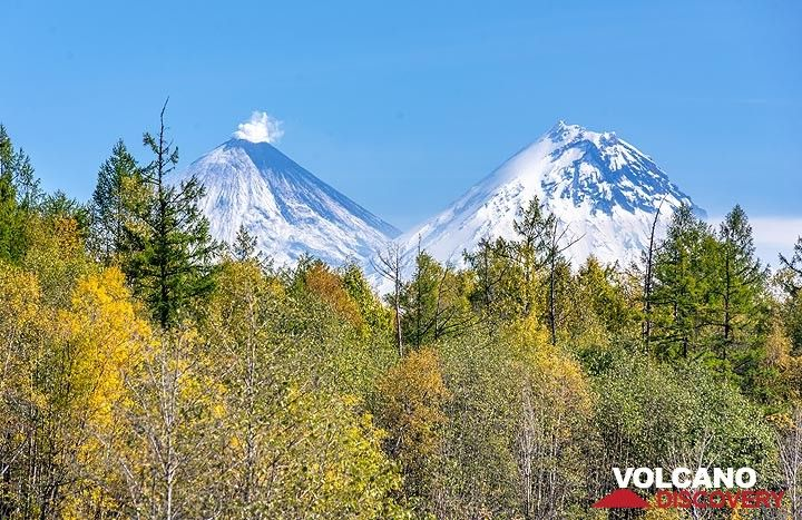 Klyuchevskoy and Kamen volcanoes behind the forest line (Photo: Tom Pfeiffer)