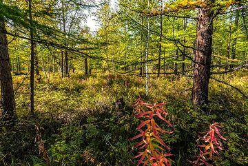Autumn colors in the forest (Photo: Tom Pfeiffer)