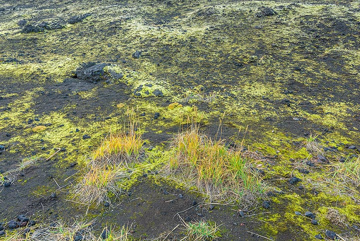 Tundra colors (Photo: Tom Pfeiffer)