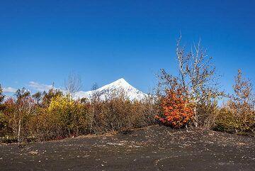 kamchatka_k25215.jpg (Photo: Tom Pfeiffer)