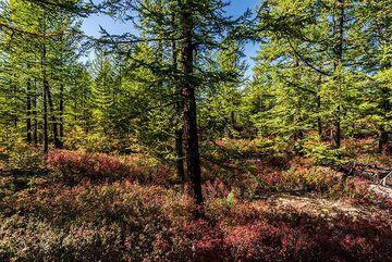 kamchatka_k25231.jpg (Photo: Tom Pfeiffer)